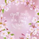 Cartão da mola da flor de cerejeira Foto de Stock Royalty Free