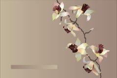 Cartão da orquídea Imagens de Stock Royalty Free