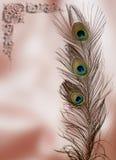Cartão da pena do pavão Fotos de Stock Royalty Free
