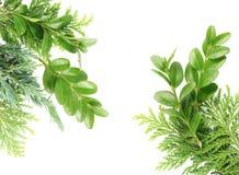 Cartão das plantas verdes imagem de stock
