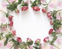 Cartão das rosas frescas que formam um quadro redondo com uma cópia do espaço fotografia de stock royalty free