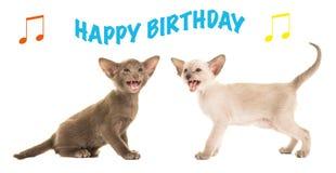 Cartão de aniversário com os gatos siamese do bebê que cantam o feliz aniversario Imagens de Stock