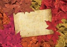 Cartão de Atumn Fotografia de Stock Royalty Free