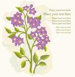 Cartão de Greetin Fotos de Stock Royalty Free