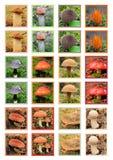 Cartão de jogo dos cogumelos imagens de stock