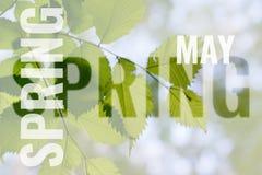 Cartão de maio com fundo da mola Imagens de Stock