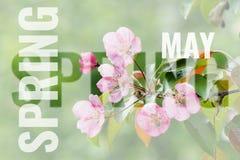 Cartão de maio com fundo da mola Fotografia de Stock