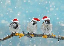 Cartão de Natal com os pássaros engraçados que sentam-se em um ramo no inverno dentro Fotos de Stock Royalty Free