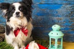 Cartão de Natal pequeno do cão Foto de Stock