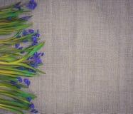 Cartão de Páscoa com flores da mola Scilla azul e tela de linho Foto de Stock