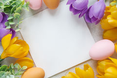 Cartão de Páscoa com flores do açafrão Fotos de Stock