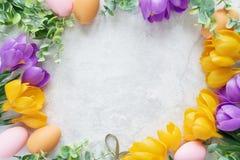 Cartão de Páscoa com flores do açafrão Foto de Stock