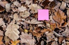 Cartão de papel e natureza cor-de-rosa Fotos de Stock