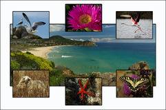 Cartão de Sardinia imagem de stock royalty free