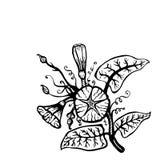 Cartão desenhado à mão floral Ilustração Stock