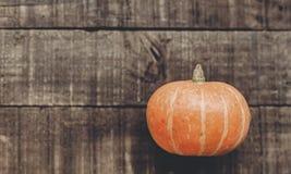 cartão do conceito do Dia das Bruxas ou da ação de graças pumpk bonito Fotografia de Stock Royalty Free