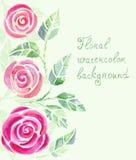 Cartão do convite com as flores das rosas da aquarela Imagem de Stock