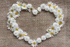 Cartão do dia dos Valentim Coração das margaridas Fotografia de Stock