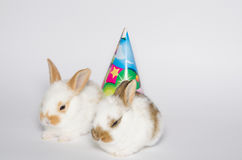 Cartão do feliz aniversario com coelhos imagens de stock royalty free