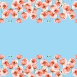Cartão do molde com papoilas em um fundo azul Fotografia de Stock Royalty Free