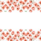 Cartão do molde com papoilas em um fundo branco Imagem de Stock