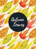 Cartão do outono com folhas Fotografia de Stock Royalty Free