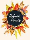 Cartão do outono com folhas Fotos de Stock