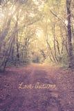 Cartão do outono do amor Imagens de Stock