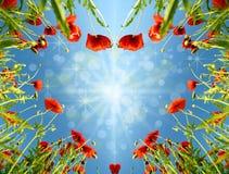 Cartão do Valentim como coração com as papoilas no fulgor do ` s do sol com efeito b Imagens de Stock Royalty Free