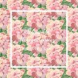Cartão do vetor do vintage com a flor do gerânio da aquarela Imagens de Stock