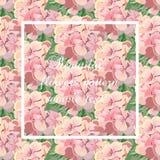 Cartão do vetor do vintage com quadro da flor do gerânio da aquarela Imagens de Stock Royalty Free