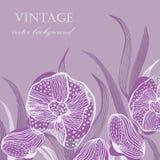 Cartão do vintage com as flores abstratas do crisântemo Fotos de Stock Royalty Free