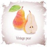 Cartão do vintage com pera Imagens de Stock