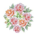 Cartão do vintage com rosas watercolor Imagem de Stock