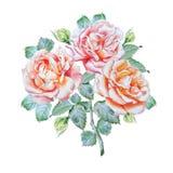 Cartão do vintage com rosas watercolor Foto de Stock