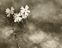 Cartão dos pêsames com flor Imagem de Stock