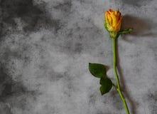 Cartão dos pêsames com rosa do amarelo Imagens de Stock Royalty Free