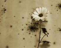 Cartão dos pêsames - flor branca Fotos de Stock