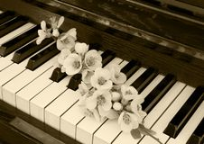 Cartão dos pêsames - flor no piano Fotos de Stock