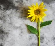 Cartão dos pêsames - girassol amarelo Foto de Stock Royalty Free