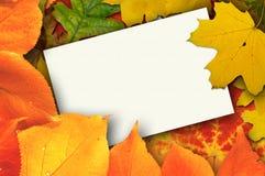 Cartão em branco cercado pelas folhas de outono bonitas Imagem de Stock
