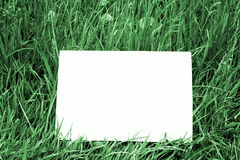 Cartão em branco na obscuridade - grama verde Foto de Stock