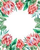 Cartão encantador do convite beira Pre-feita do quadro com protea de rei e as folhas tropicais ilustração royalty free