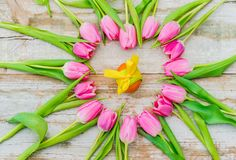 Cartão feliz da Páscoa com as flores das tulipas e a decoração cor-de-rosa do ovo da páscoa Fotografia de Stock