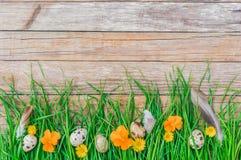 Cartão feliz da Páscoa com o prado bonito com flores, grama verde e ovos da páscoa no fundo de madeira rústico Foto de Stock