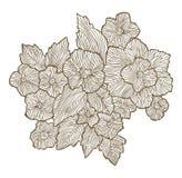 Cartão floral Imagens de Stock