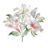 Cartão floral com flores lilia Alstroemeria Borboleta Ilustração da aguarela Fotografia de Stock Royalty Free