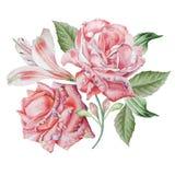 Cartão floral com flores Rosa Alstroemeria Ilustração da aguarela Imagem de Stock