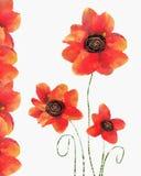 Cartão floral com a papoila vermelha no fundo branco Imagens de Stock