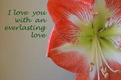 Cartão floral com texto Imagens de Stock
